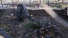 140818165321-gaza-zoo-18-horizontal-gallery